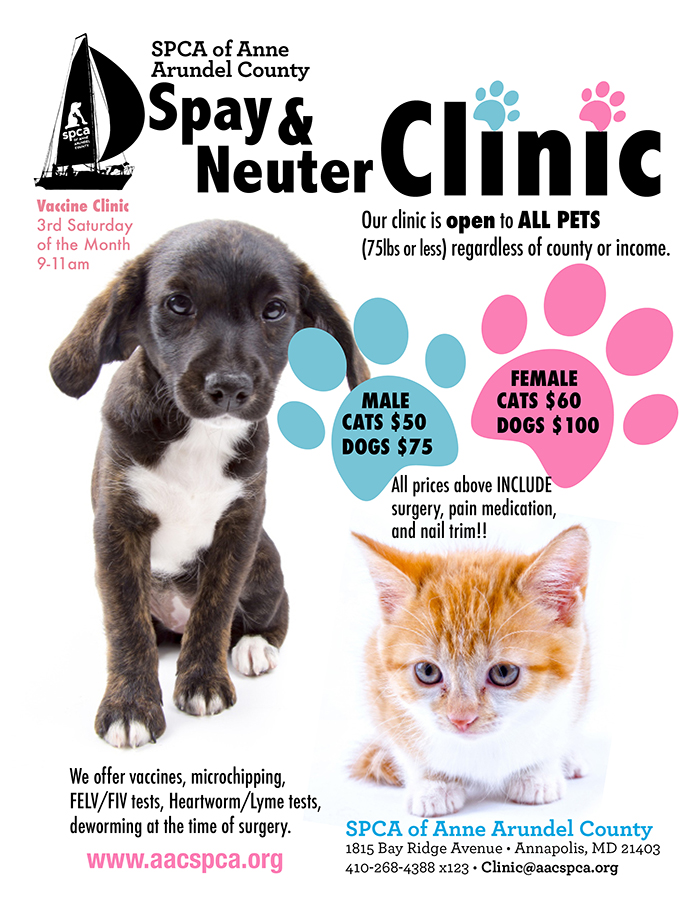 When Is Best To Neuter A Male Dog