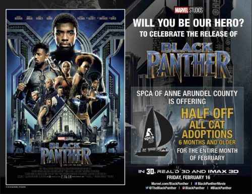 Black Cat Special for February – Black Panther