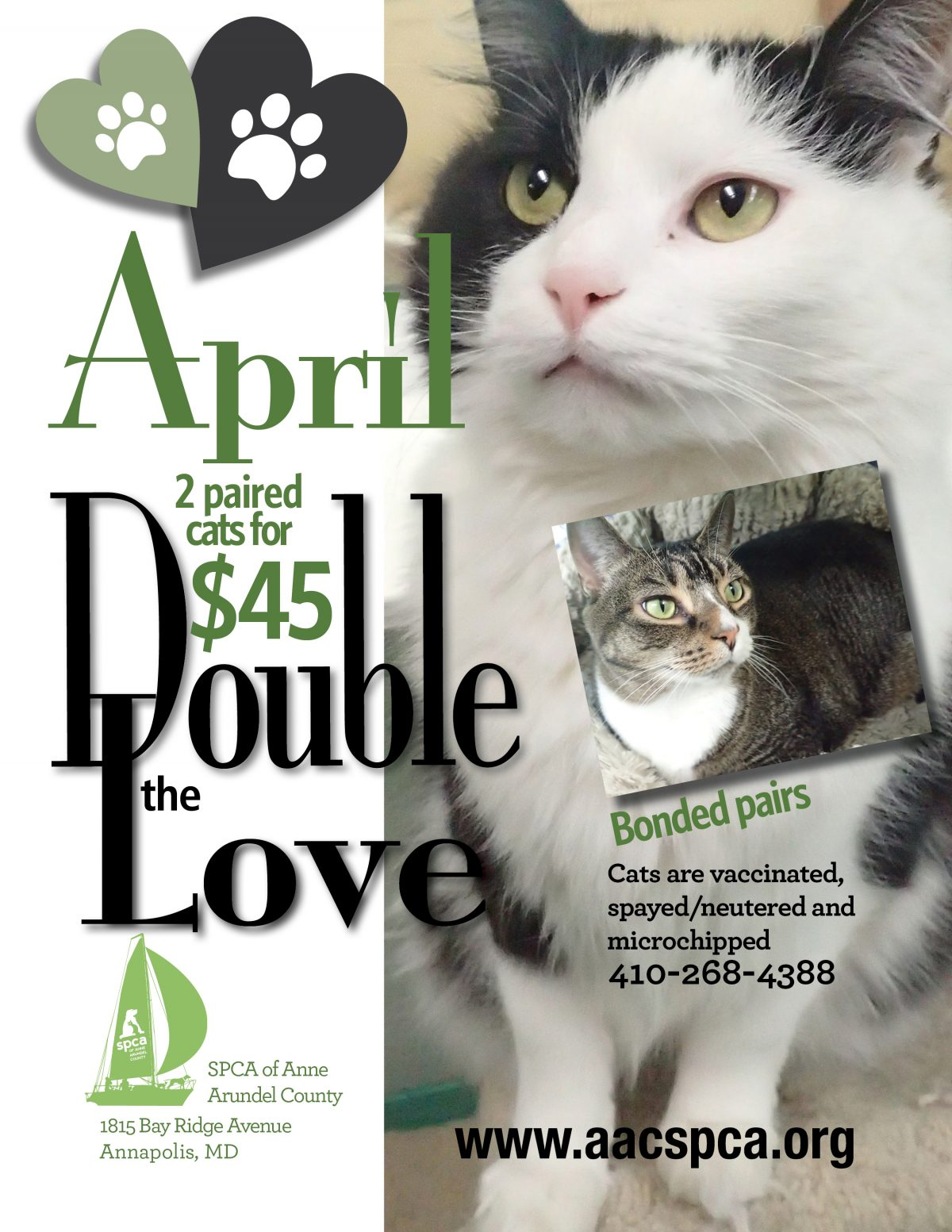April Adoption Specials