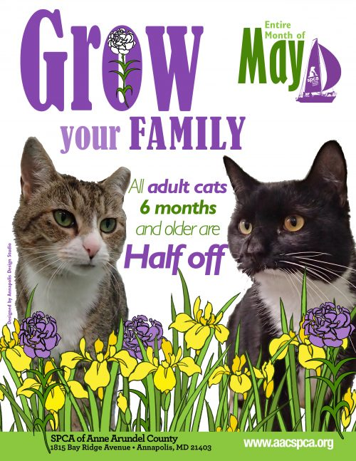 May Adoption Specials