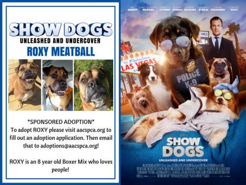 Show Dogs Loves Roxy MeatBall!