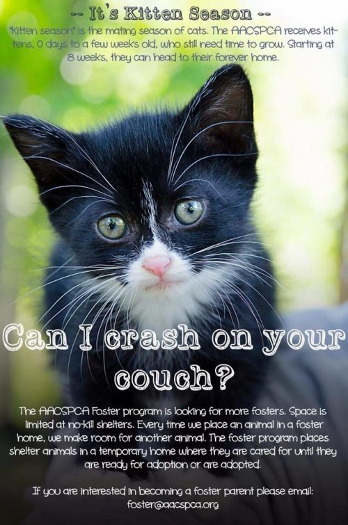 Urgent: Kitten Fosters Needed!