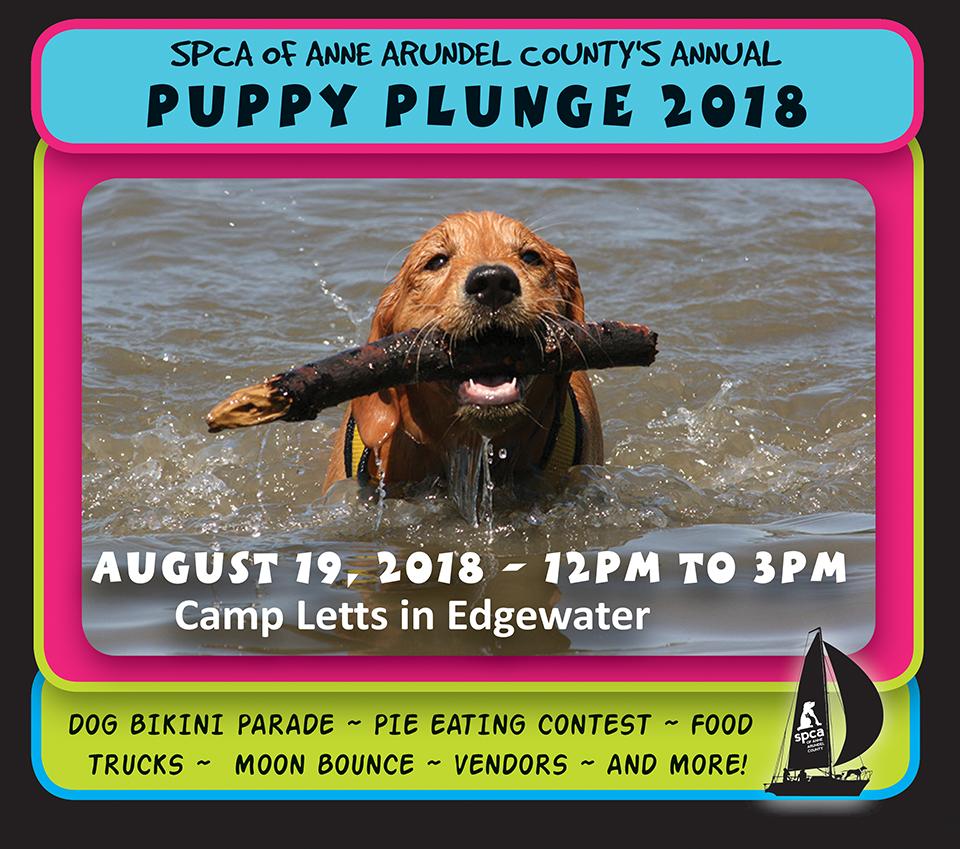 Puppy Plunge – Aug 19