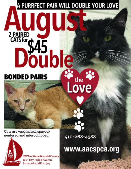 Adoption Special – SPCA of Anne Arundel County