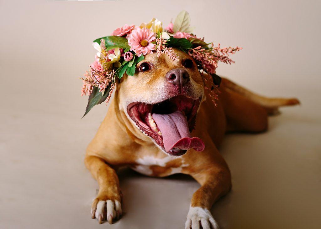 Adopt A Pet u2013 SPCA of