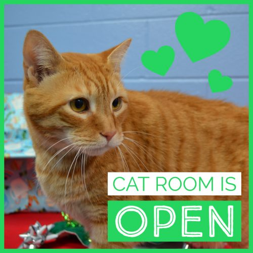 Cat Room REOPENED