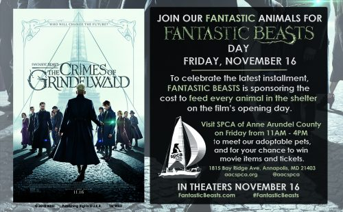Fantastic Beasts Sponsorship!
