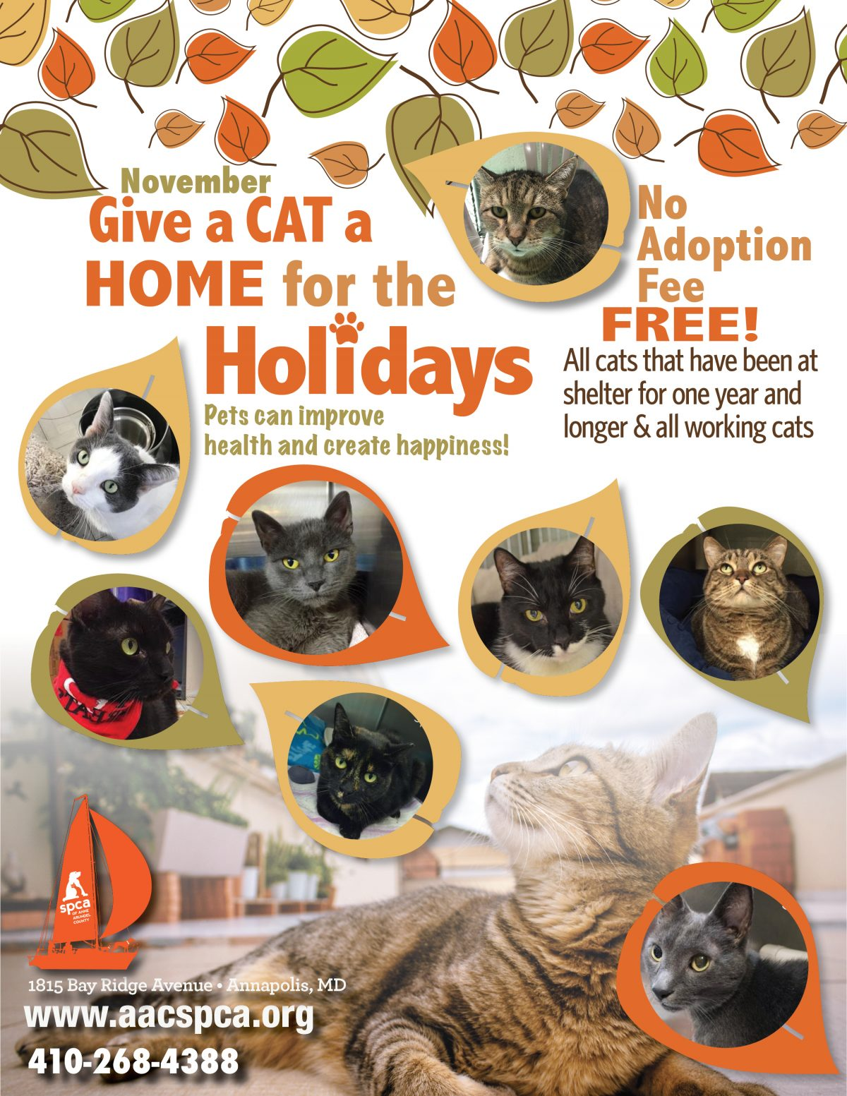 Cats – Home for the Holidays!