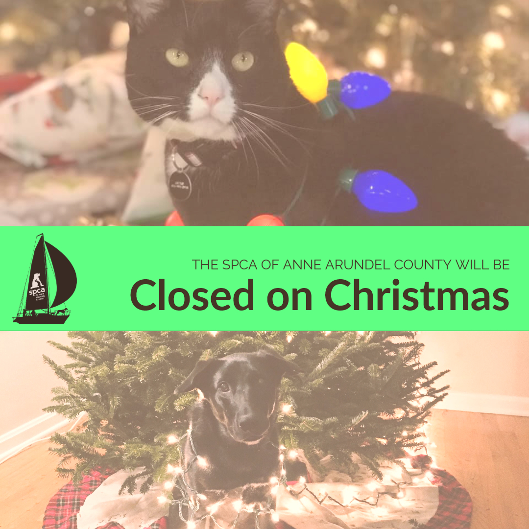 Shelter CLOSED on Christmas