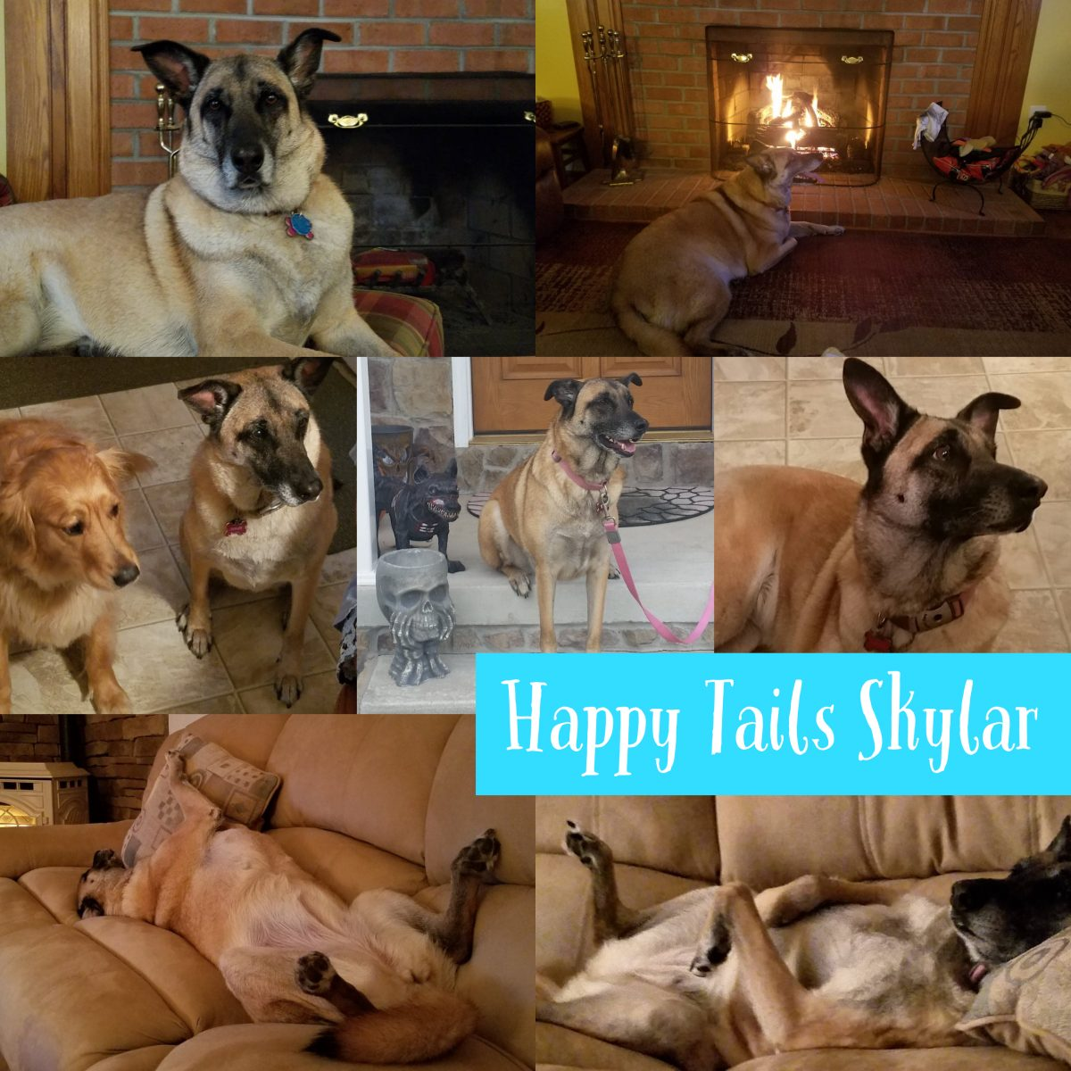 Happy Tails Skylar!