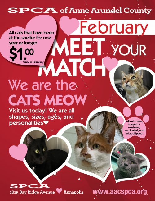 Felines looking for love!