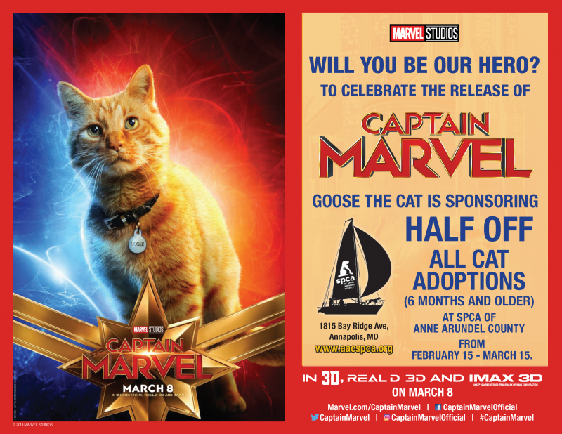 Captain Marvel Cat Special!