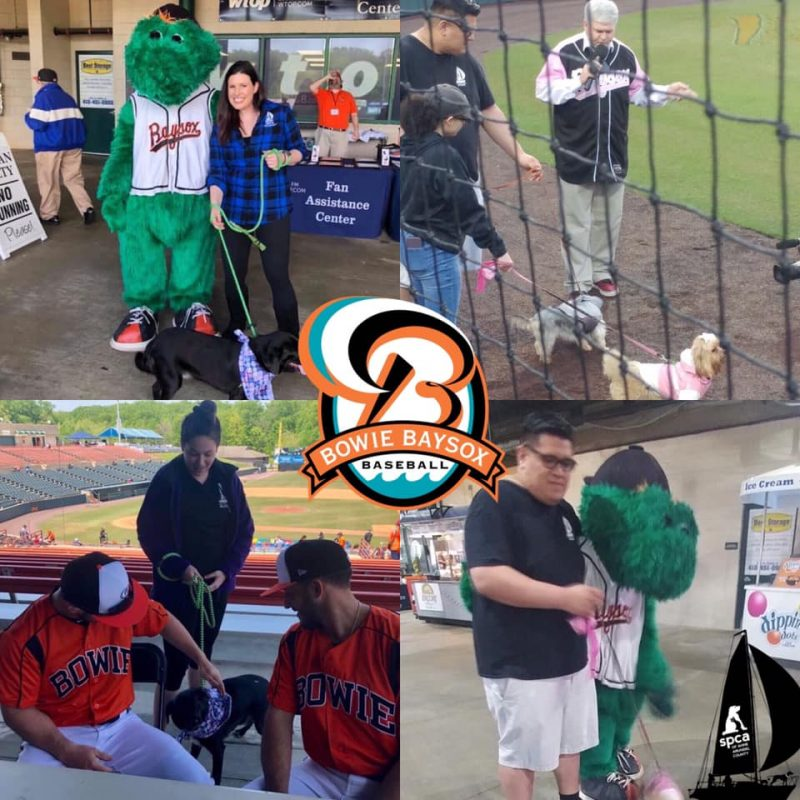 Bowie Baysox Diamond Dog – 5/31