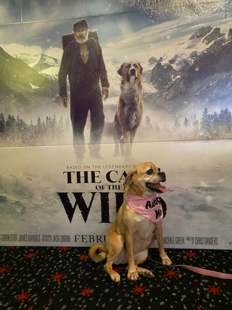 A WILD time at SPCA's first Movie Premiere Fundraiser