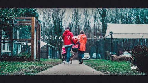 Share Your Love, Adopt -Brynn Zittle Cinema