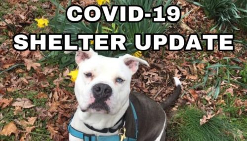 COVID-19 Shelter Policies Update