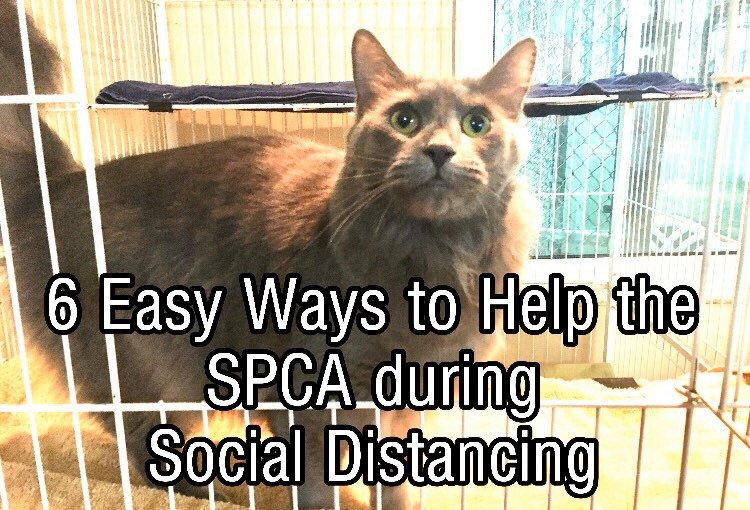 6 Easy Ways to Help the SPCA during Social Distancing
