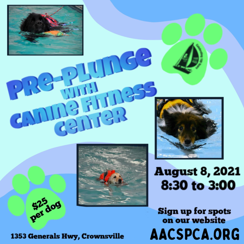 Pre Plunge at Canine Fitness Center – 8/8