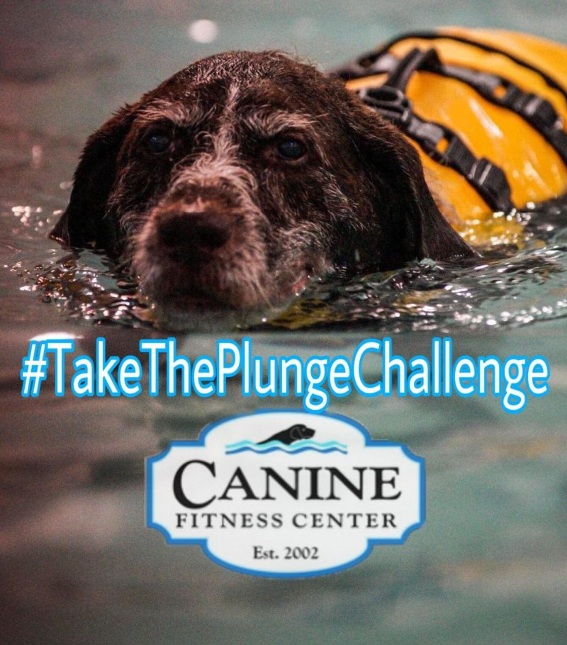 Plunge at Canine Fitness Center 8/2 & 8/9