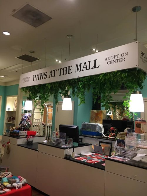 Have you visited Paws at the Mall?