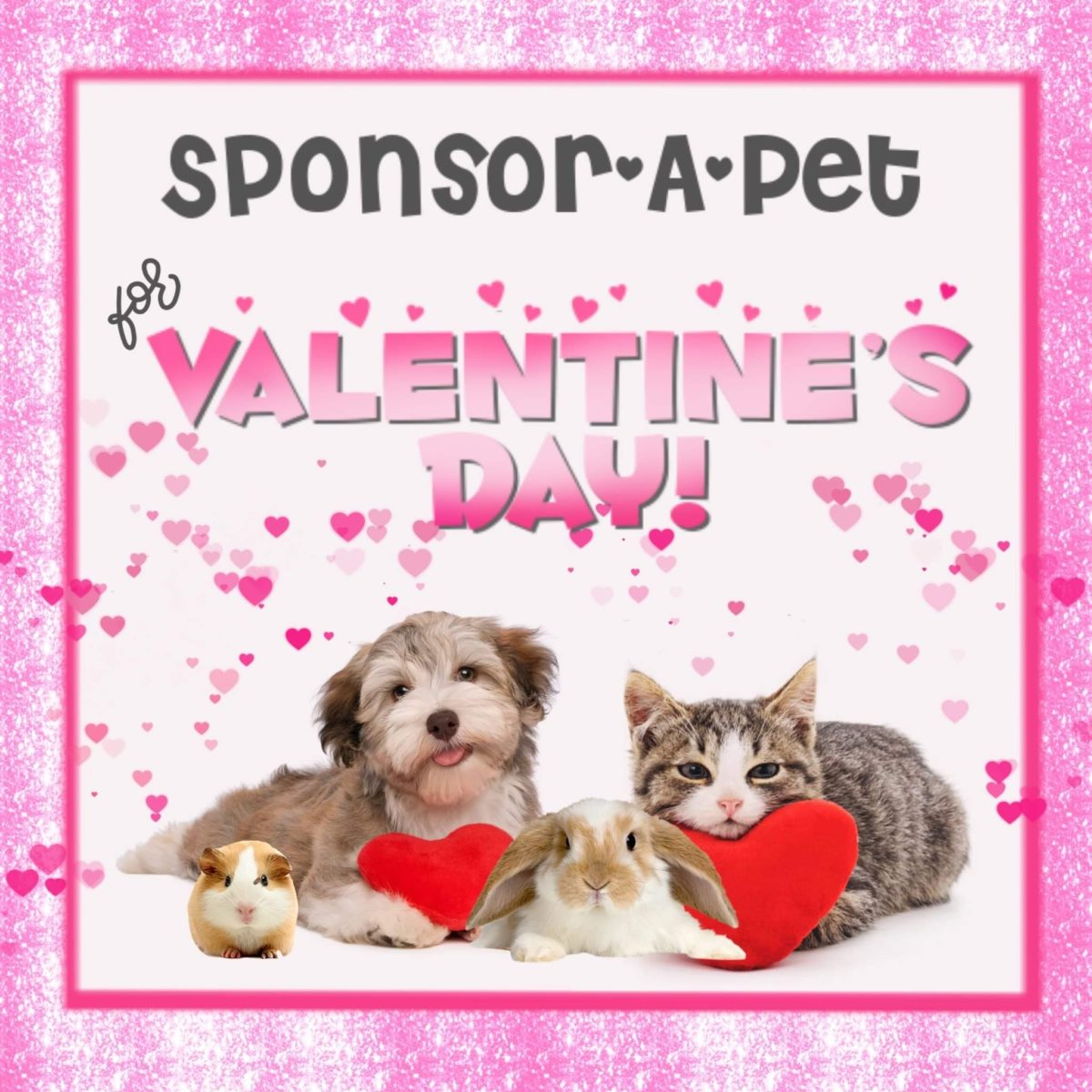 Sponsor a Pet for Valentine's Day!