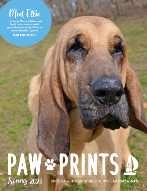 Paw Prints – Spring 2021 Newsletter