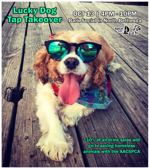 Bark Social Tap Takeover – 10/13